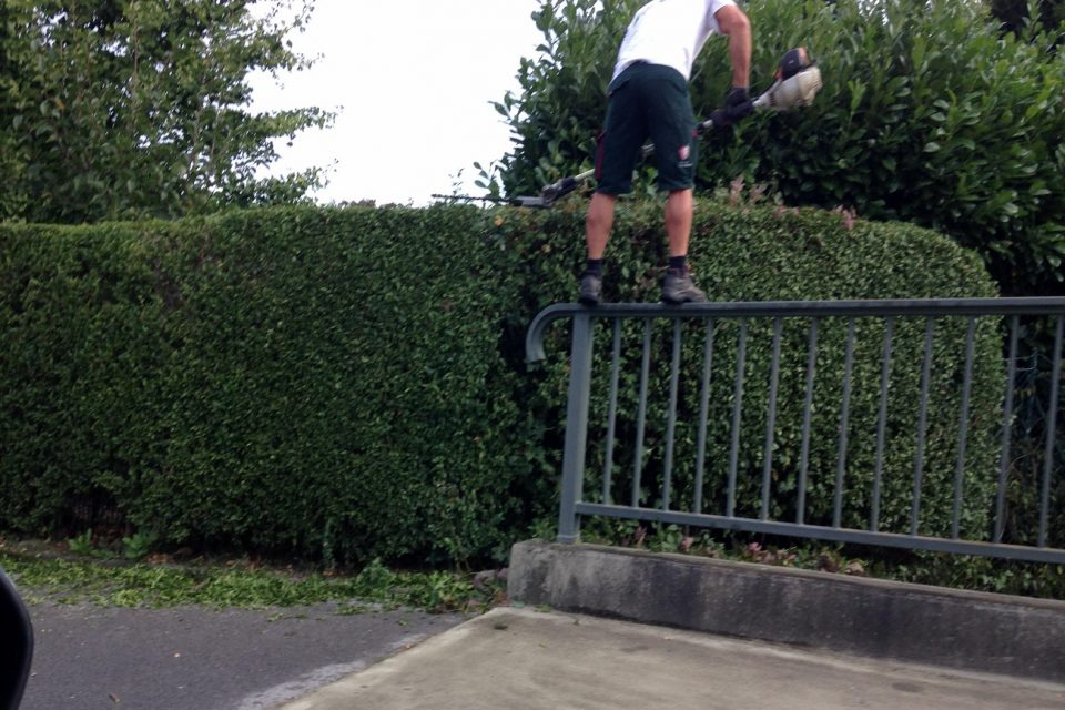 Picture This: Shrubbery Balancing Act